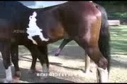 Chicas folladas por caballos corriendose en sus vaginas (00:15)